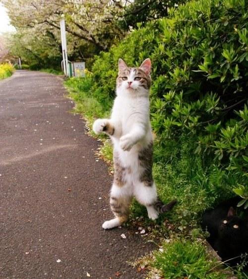 fotografie-pisica