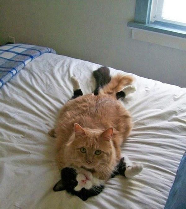 imagine-cu-pisici