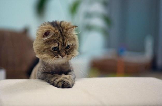 imagini-cu-pisica
