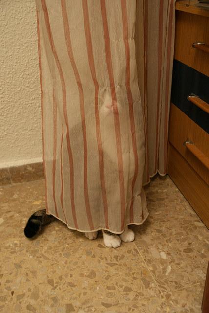 pisica-perdea