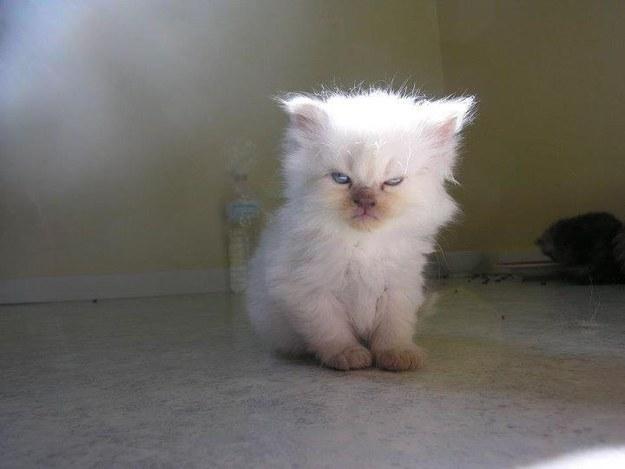 poza-haioasa-pisica
