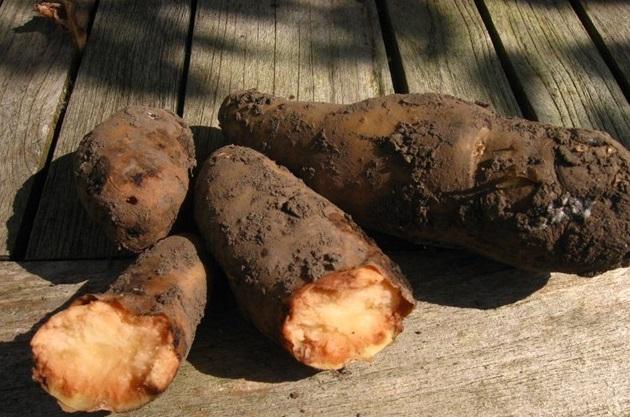 Cartoful pentru pete